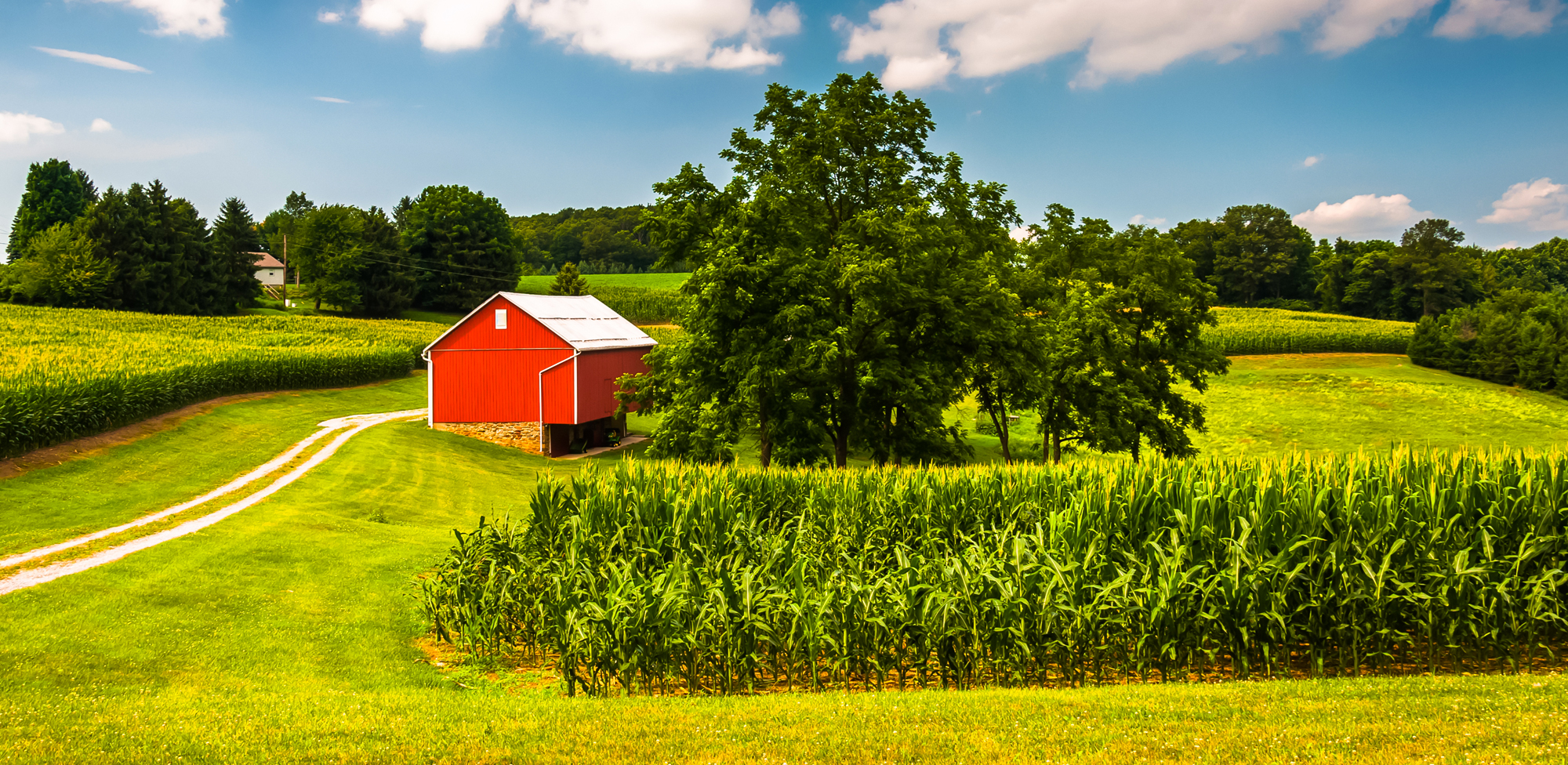 farm landscape with red barn and corn
