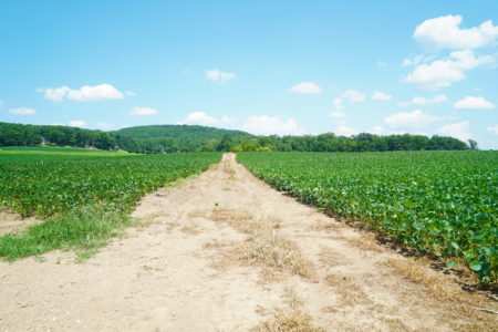 a dirt road with green crops on either side leading to a hill in the distance